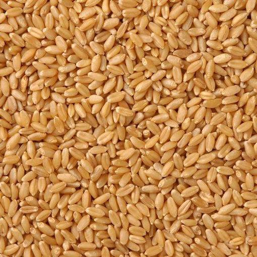 Picture of Organic Wheat Gehu (5kg)